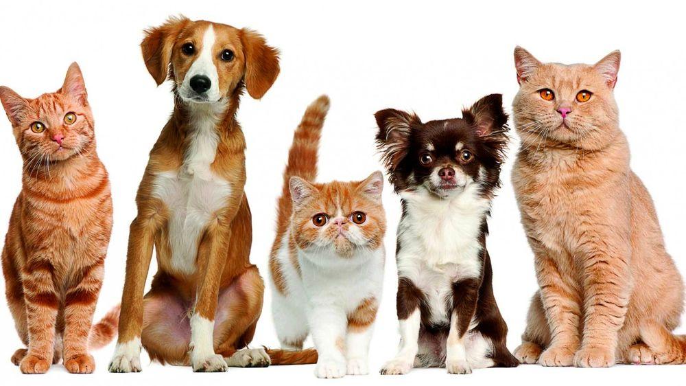 Gadget per animali: le migliori idee per fare contento il tuo pet